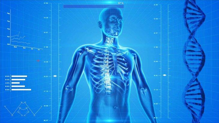 Corpo Humano © Pixabay